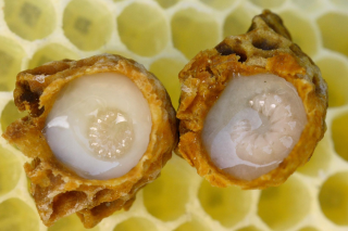 Természetes Méhpempő